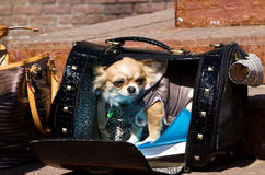 Dog in a bag Stock Image