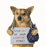Dog got out its comfort zone. The dog with a bag and a poster around its neck. Step out of your comfort zone. Isolated stock image