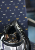 Dog in bag and watching in the train Royalty Free Stock Photography