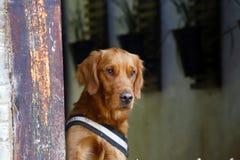 Dog, Baisha, Yunnan, China stock photos