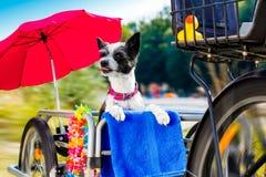 Dog in bakset behind bike stock photography