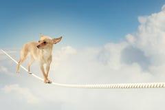 Dog balancing on rope Stock Photos