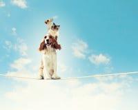 Dog balancing on rope Royalty Free Stock Photos