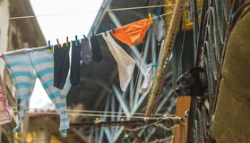 A Dog on a Balcony Next to Hanging Laundry in Porto Stock Photos