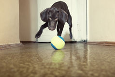 Dog and ball Stock Photo