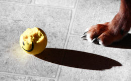 Dog and ball Royalty Free Stock Photography