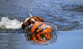 Dog&ball Стоковое Изображение