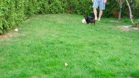 Dog and ball stock footage