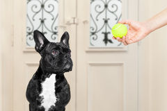 Dog with ball Stock Photo