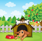 A dog with a ball inside a doghouse Royalty Free Stock Photography