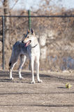 Dog with ball Royalty Free Stock Photos