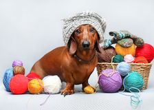 Dog and ball of threads Stock Photos