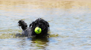 Dog Ball Water Stock Photo
