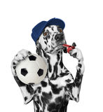 Dog with ball and whistle. Dog with a ball and whistle -- isolated on white background royalty free stock images