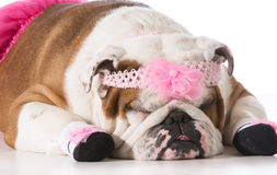 Dog ballerina Royalty Free Stock Photos