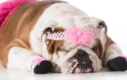 Dog ballerina Royalty Free Stock Photos