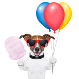 Dog balloons and cotton candy. Dog  with bunch  of balloons and cotton candy and shades Royalty Free Stock Images