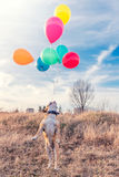 Dog with balloons Stock Photography