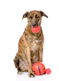 Dog with balls. isolated on white background Royalty Free Stock Images
