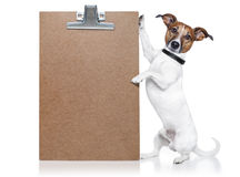 Dog banner. A dog holding / showing an empty banner Royalty Free Stock Photos