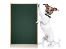 Dog banner. A dog holding / showing an empty banner Stock Photo