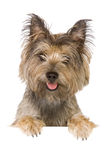 Dog banner. Dog isolated on white background