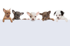 Dog banner of five Royalty Free Stock Images