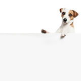 Dog with banner. Pet showing at placard. Fun animals Stock Image