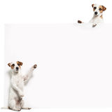 Dog with banner. Pet showing at placard. Fun animals Royalty Free Stock Photos