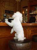 Dog on the bar