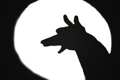 Dog barking at the moon Stock Photo