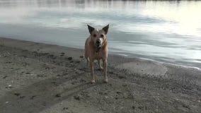 Dog barking Near Beach Edge