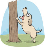 Dog Barking Up a Tree Royalty Free Stock Photo