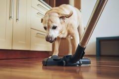Dog barking on vacuum cleaner
