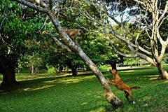 The dog barks at the monkey royalty free stock photo