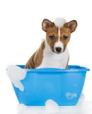 The dog in the basin. On a white background stock photo