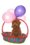 Dog in basket Royalty Free Stock Photo