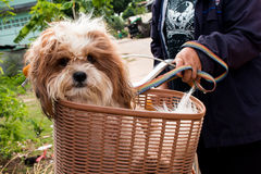 Dog  in a basket on a bicycle Royalty Free Stock Photos
