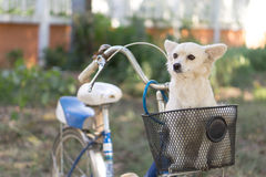 Dog in basket Stock Photography