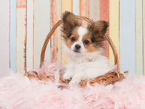 Dog in basket in pastel colors