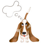 The dog Basset Hound Stock Photography