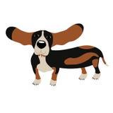 Dog Basset Hound Royalty Free Stock Images