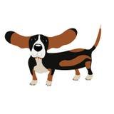 Dog Basset Hound Royalty Free Stock Photography