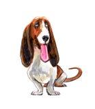 Dog Bassett Picture. Dog Bassett Picture stock images