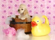 Dog bath stock photography