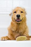 Dog Bath Stock Photography