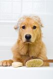 Dog Bath Royalty Free Stock Photography