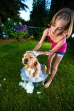 Dog Bath. A young girl massages the scalp of her golden retriever dog with soap and water while he sits in a metal bath tub outside Royalty Free Stock Photo
