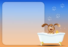Dog in bath for grooming Royalty Free Stock Images
