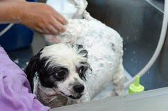 Dog Bath Royalty Free Stock Photography